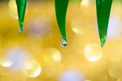 Guld- bokeh, abstrakt bakgrund Royaltyfri Fotografi