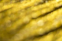 Guld- Bokeh abstrakt bakgrund Fotografering för Bildbyråer