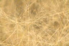Guld- brunt fodrar och pricker abstrakt bakgrund för naturen Arkivfoton