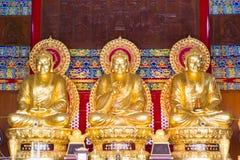 Guld- Chainese Buddha på den Leng Noei Yi 2 templet Royaltyfri Foto