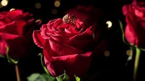 Guld- cirkel och rosor på en svart bakgrund valentin för dag s arkivfilmer