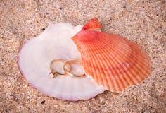 guld- cirklar shell två som gifta sig Royaltyfri Foto