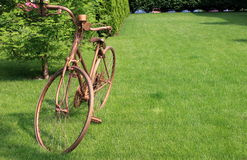 guld- cykel Royaltyfri Foto