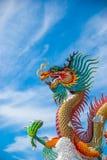Guld- drake på himmelblått Arkivbilder
