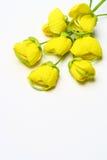 guld- dusch för blomma Royaltyfria Bilder