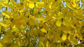 guld- dusch för blomma Fotografering för Bildbyråer