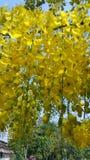 guld- dusch för blomma Royaltyfri Foto