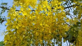 guld- dusch för blomma Arkivbild