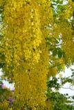 guld- dusch för blomma Arkivfoto