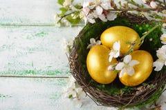 Guld- easter ägg i en bygga bo Royaltyfria Bilder
