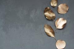 Guld- eukalyptussidor på mörka Gray Cement Background med kopieringsdeg Fotografering för Bildbyråer