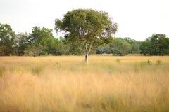guld- fält Royaltyfri Fotografi