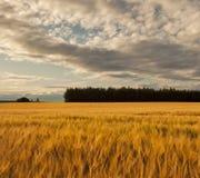 Guld- fält för Moray. royaltyfri foto