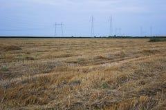 Guld- fält för sommar Arkivbild