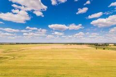 Guld- fält i sommar fotografering för bildbyråer