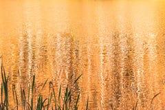 Guld- färgvattensjö från solnedgång arkivfoton