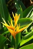 guld- fackla för blomma Arkivbild