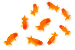 guld- fisk Arkivfoton