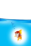 Guld- fisk i blått vatten Arkivbild