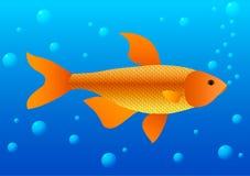Guld- fisk i vatten med bubblor Arkivbilder