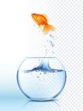 Guld- fisk som ut hoppar bunkeaffischen Arkivbild