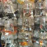 Guld- fiskmarknad Arkivfoto