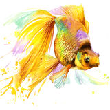 Guld- fiskT-tröjadiagram, den guld- fiskillustrationen med färgstänkvattenfärgen texturerade bakgrund Arkivfoton