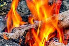 Guld- flamma för natur Arkivbilder