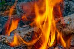 Guld- flamma för natur Royaltyfria Foton
