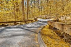 Guld- Forest Road Royaltyfri Foto