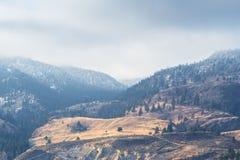 Guld- gräs- kullar kontrasterar med skogsnö täckte berg och dimma i vinter arkivfoton