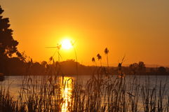 guld- gräsflodstrandsolnedgång Arkivbilder