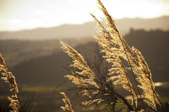 Guld- gräslandskap Royaltyfri Fotografi