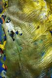 Guld- gräsplanblått målar guld- färger för den violetta ljusa vattenfärgen, abstrakt bakgrund Arkivbilder