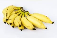 Guld- grupp av bananen royaltyfria foton