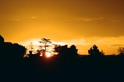 guld- gryning Arkivfoton