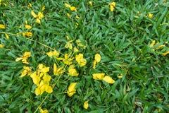 Guld- gul blomma på gräs Royaltyfri Fotografi