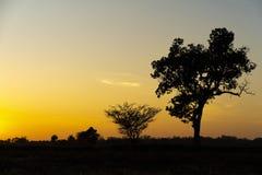 Guld- härligt soluppgångfrikänd- och konturträd & buske eller broms i bygden på morgonen på tyst dag royaltyfri foto