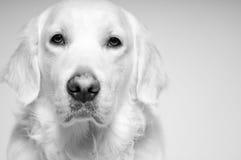 guld- hålla ögonen på dig fotografering för bildbyråer