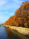 Guld- höst, gulingsidor på träden och blå himmel Fotografering för Bildbyråer