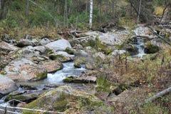 Guld- höst i den Altai regionen i Ryssland Härligt landskap - väg i höstskog arkivfoto