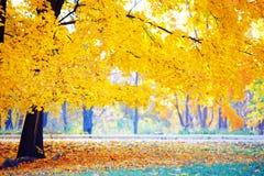 Guld- höst i skogen Royaltyfri Foto
