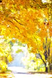Guld- höst i skogen Arkivbild