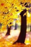 Guld- höst i skogen Royaltyfri Bild