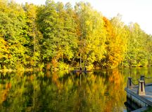Guld- höst på sjön Reflexion i vattnet av den gula folen arkivfoton