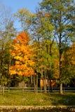 Guld- höstträd vid floden och den blåa himlen Arkivbild