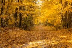 Guld- höstträdskog arkivfoto