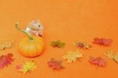Guld- hamster för tacksägelse Royaltyfria Bilder