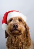 guld- hatt santa för hundklotter Royaltyfria Foton