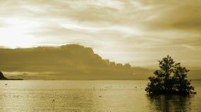 Guld- hav Arkivfoton